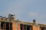 изграждане на нови покриви по поръчка