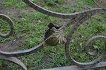 изработка на парапети от ковано желязо