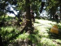 Лебедки за дърводобив