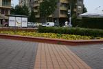 цялостно озеленяване на паркове
