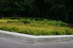 озеленяване на паркове