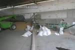 Професионално почистване с машини на пшеница